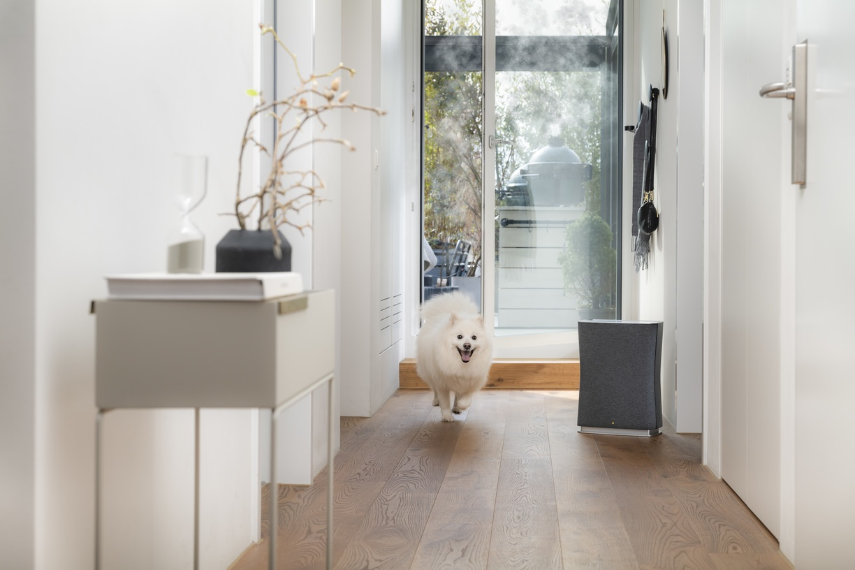 Очиститель воздуха Stadler Form Roger White New лайфстайл прихожая с собакой